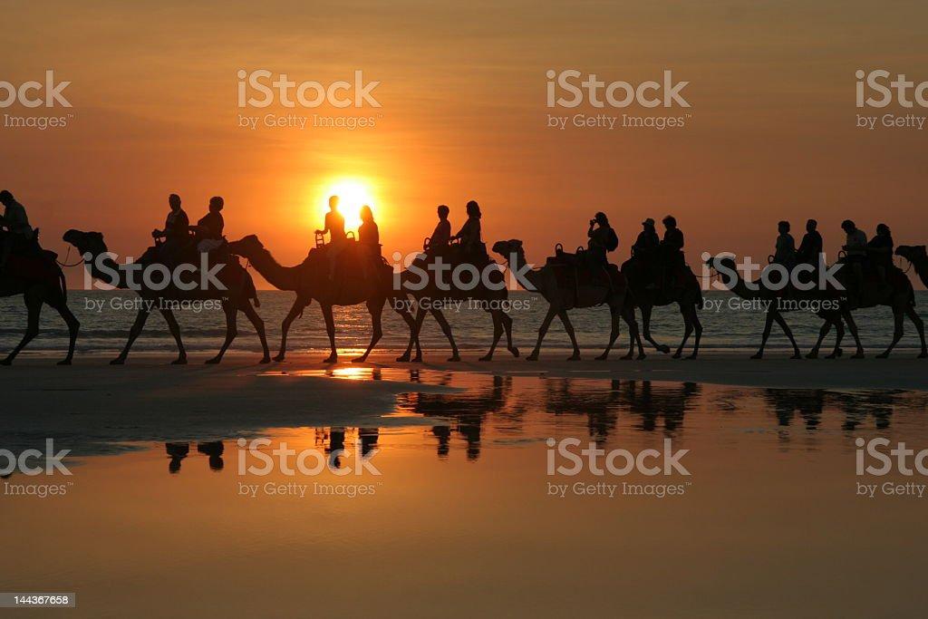 Sunset Camel Ride, Broome stock photo