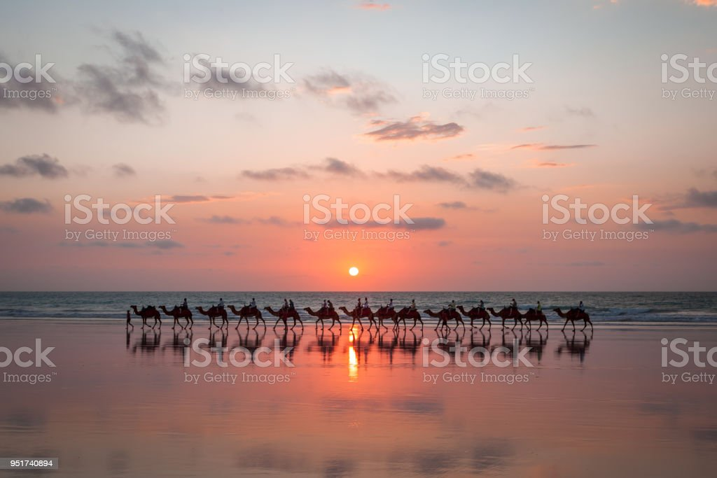 Sunset Camel Ride Cable Beach stock photo