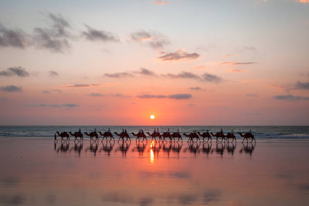 sunset camel ride cable beach - western australia stock pictures, royalty-free photos & images