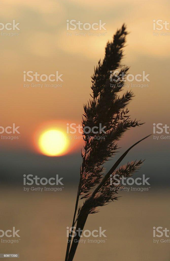 Sunset Chesapeake stock photo