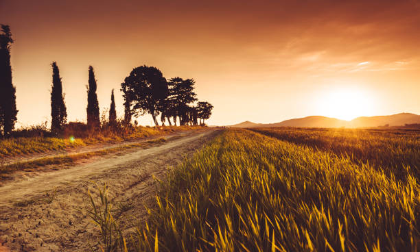 sunset countryside in italy stock photo