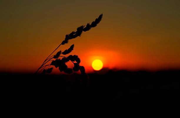 Sunset crop – Foto
