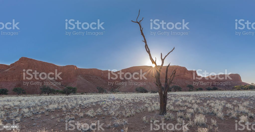 Sunset, dead tree and petrified dune stock photo