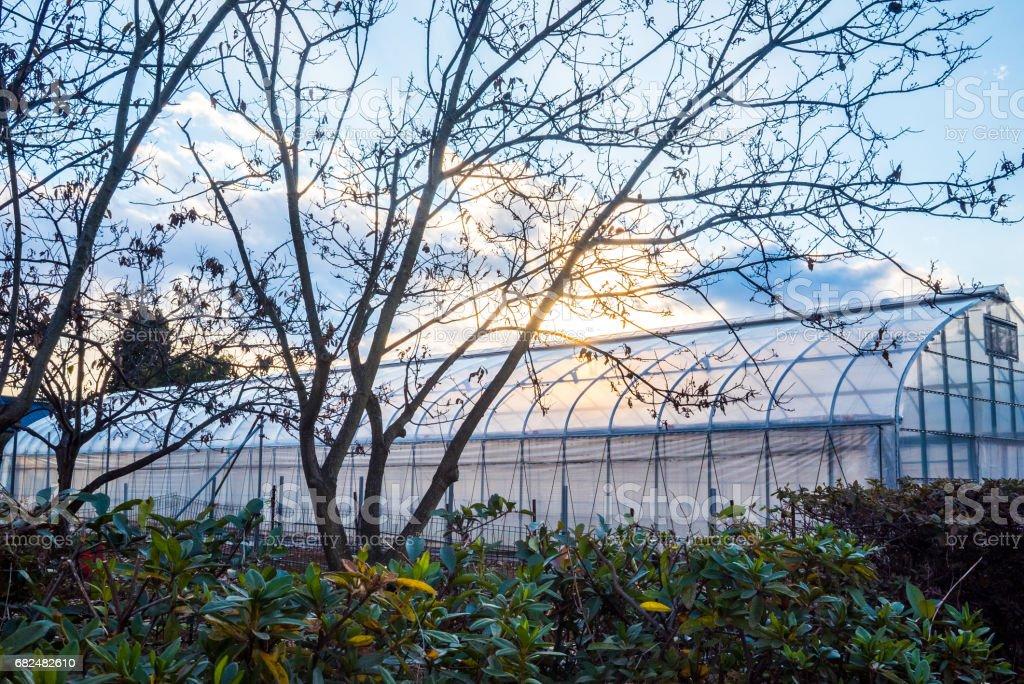 Sunset farm royalty-free stock photo