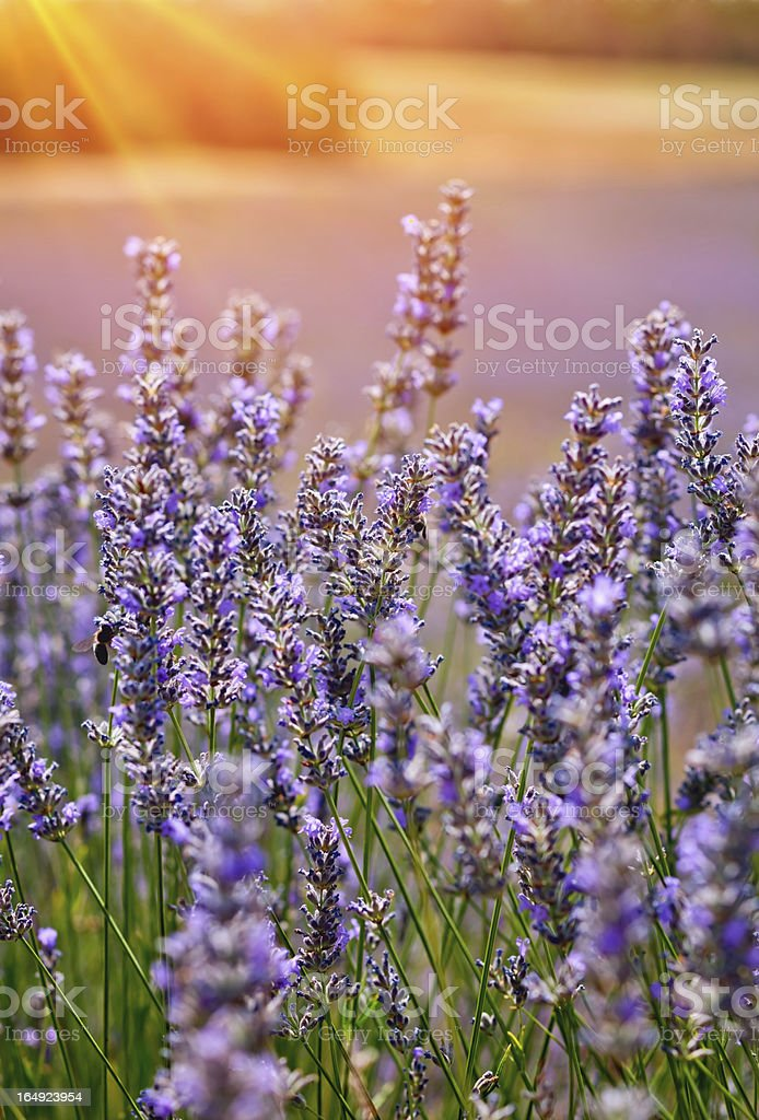 Sunset field stock photo