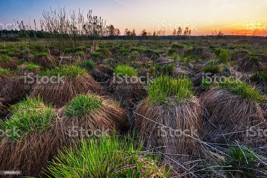 sunset field royalty-free stock photo