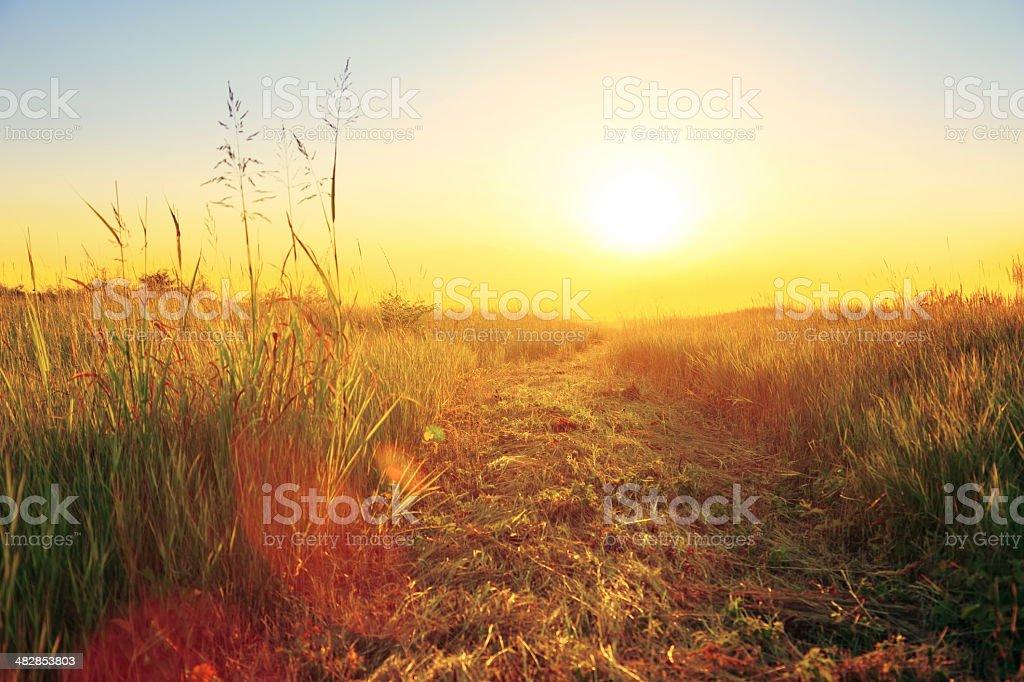 Sunset Field XXXL royalty-free stock photo