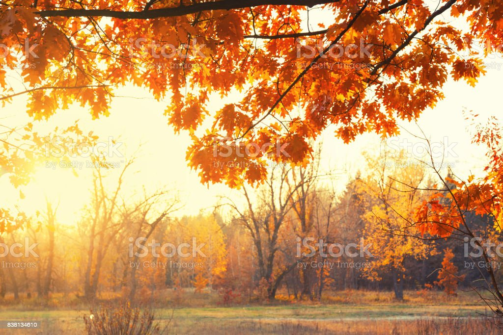 Sunset. Forest glade stock photo