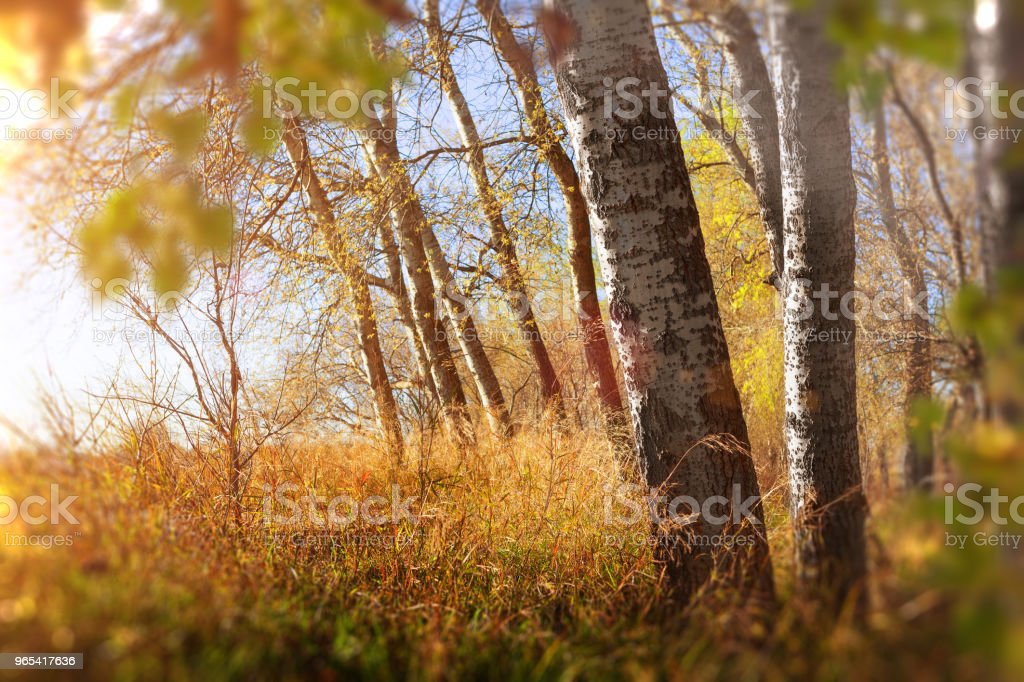 Sunset forest scenery. royalty-free stock photo