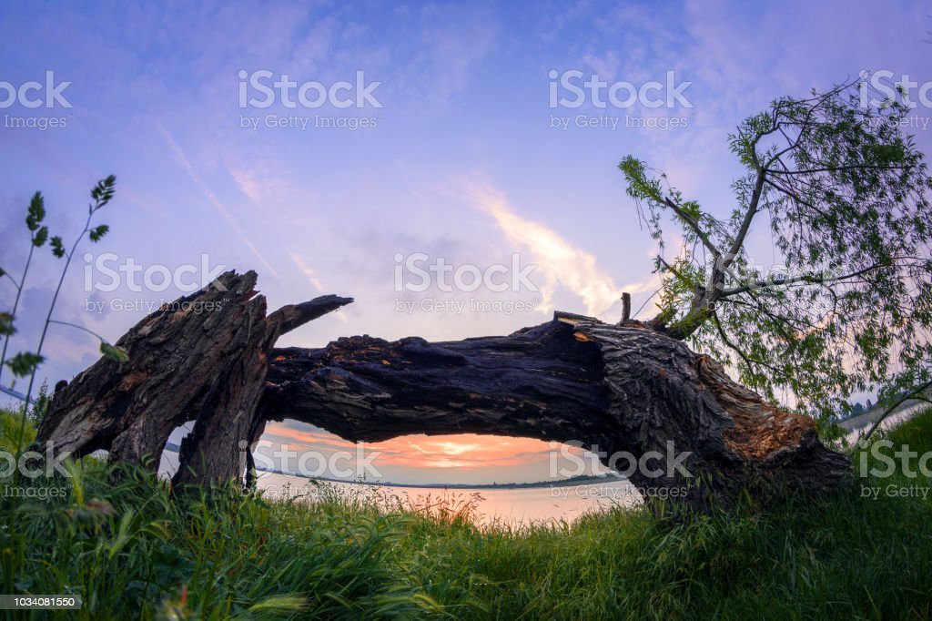 Sunset framed behind old tree stock photo