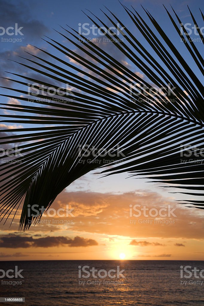 Sunset framed by palm in Maui Hawaii. royalty-free stock photo