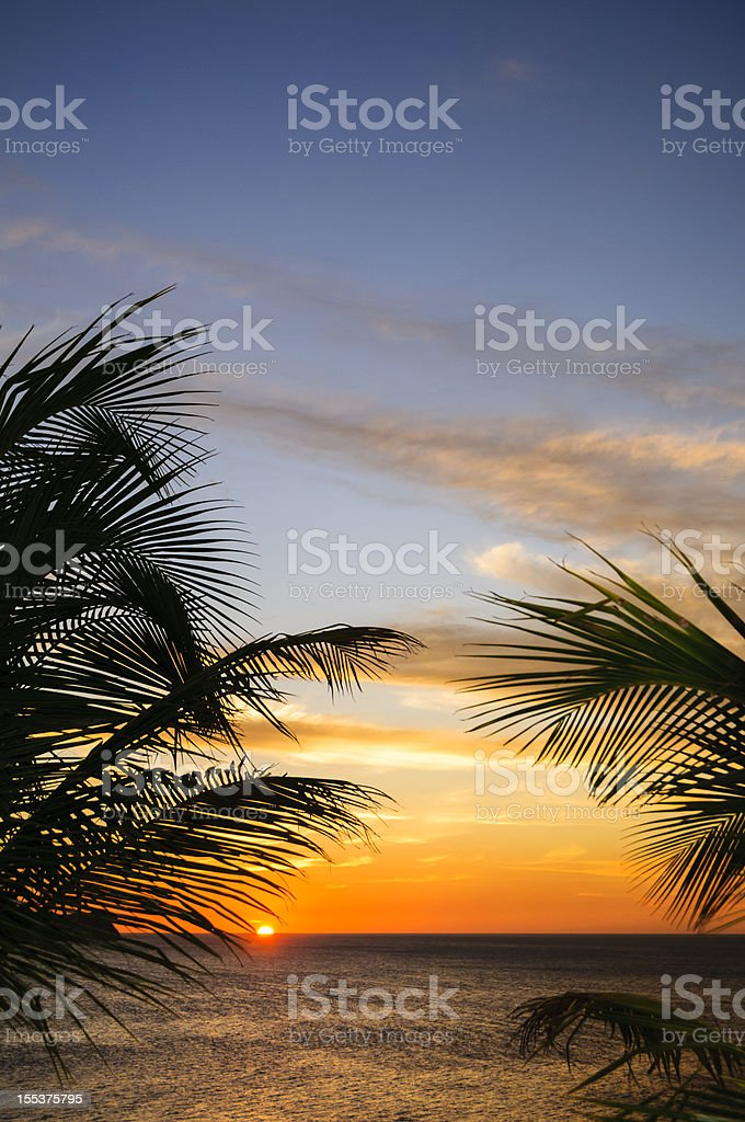 Sunset framed by palm leaves stock photo