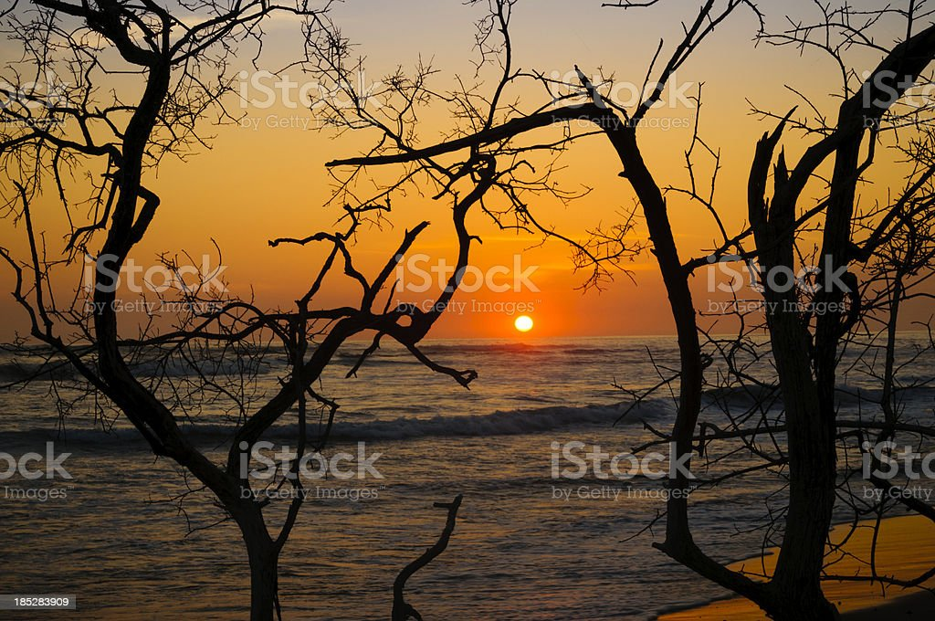 Sunset framed by twisted tree branches stock photo