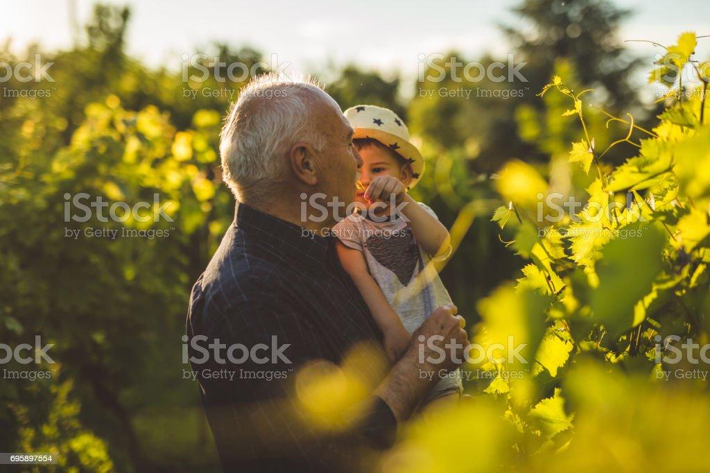 Sunset fun at vineyard stock photo