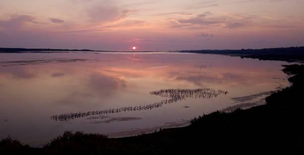 Sunset Greater Flamingos on Lake Korission, Corfu, Greece stock photo