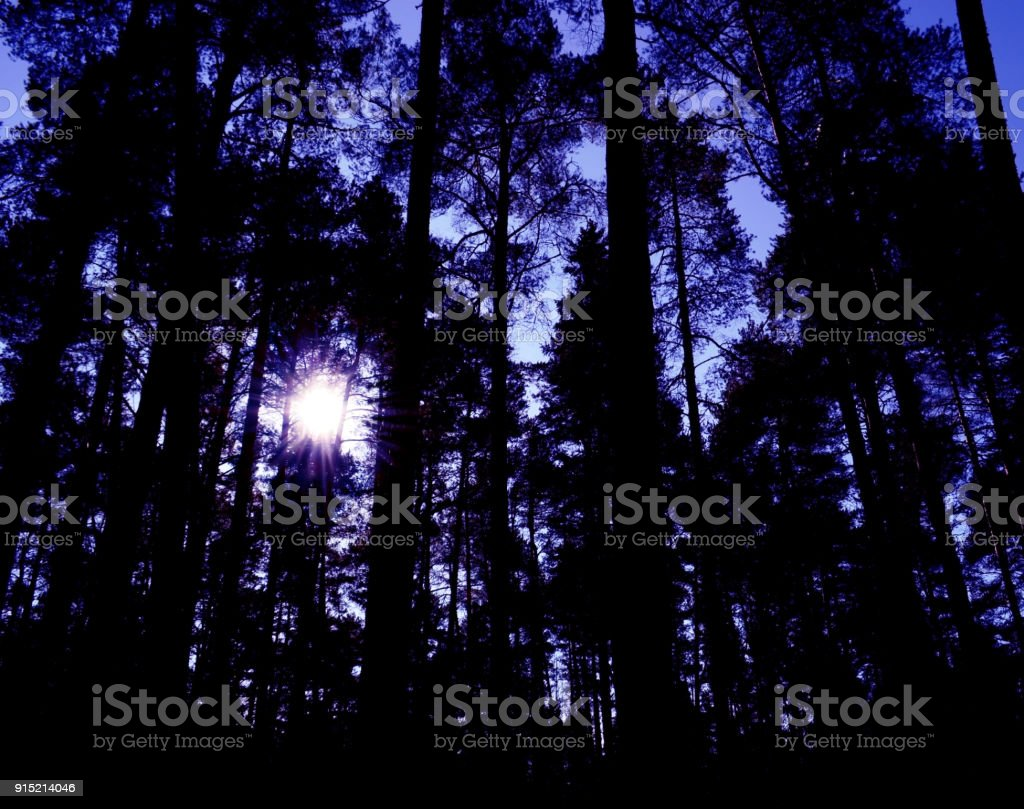 dusk halloween sun sunrise dawn sunset sunset in a magical forest