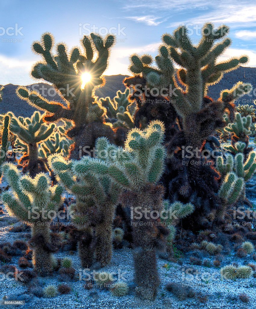 Sunset in Anza Borrego stock photo