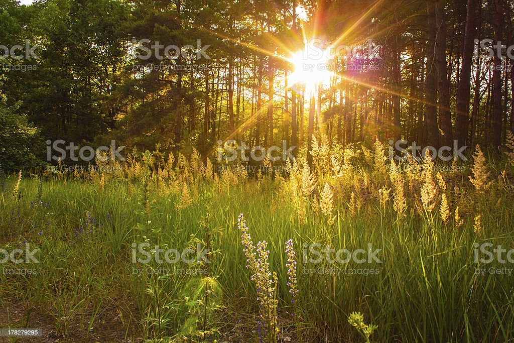 Sunset In Autumn Forest royalty-free stock photo