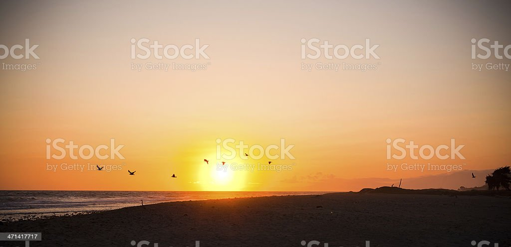 Sunset in California with Birds Flying royalty-free stock photo