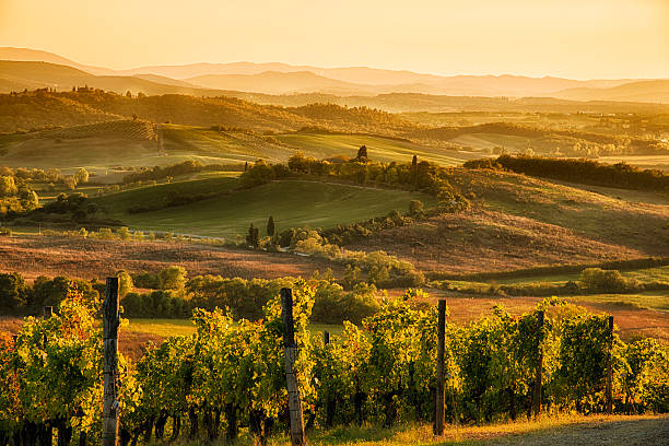 Sunset in chianti Chianti vineyard landscape in Tuscany, Italy umbria stock pictures, royalty-free photos & images