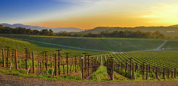 Sunset in Coombsville, Napa Valley Sunset view from the eastern hills of Coombsville, in Napa County, CA sonoma stock pictures, royalty-free photos & images