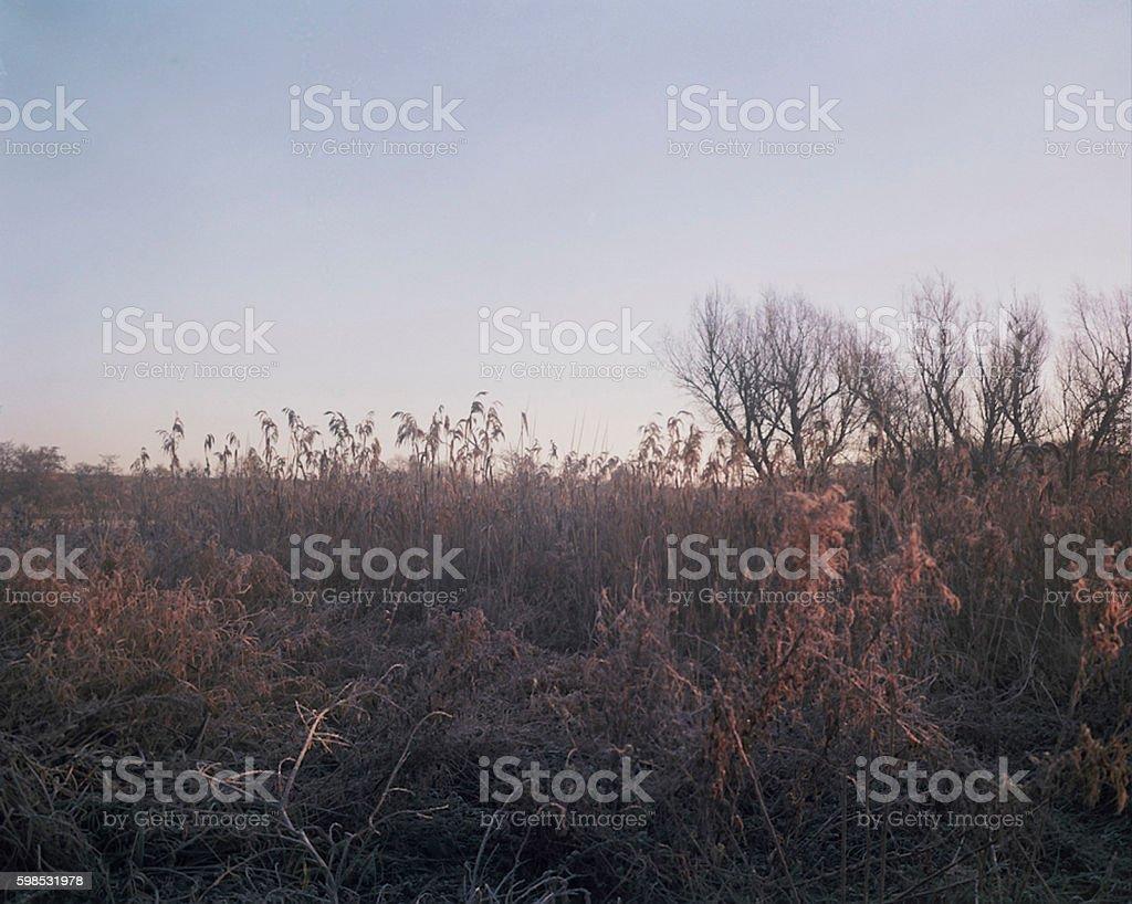 Coucher de soleil dans le champ photo libre de droits