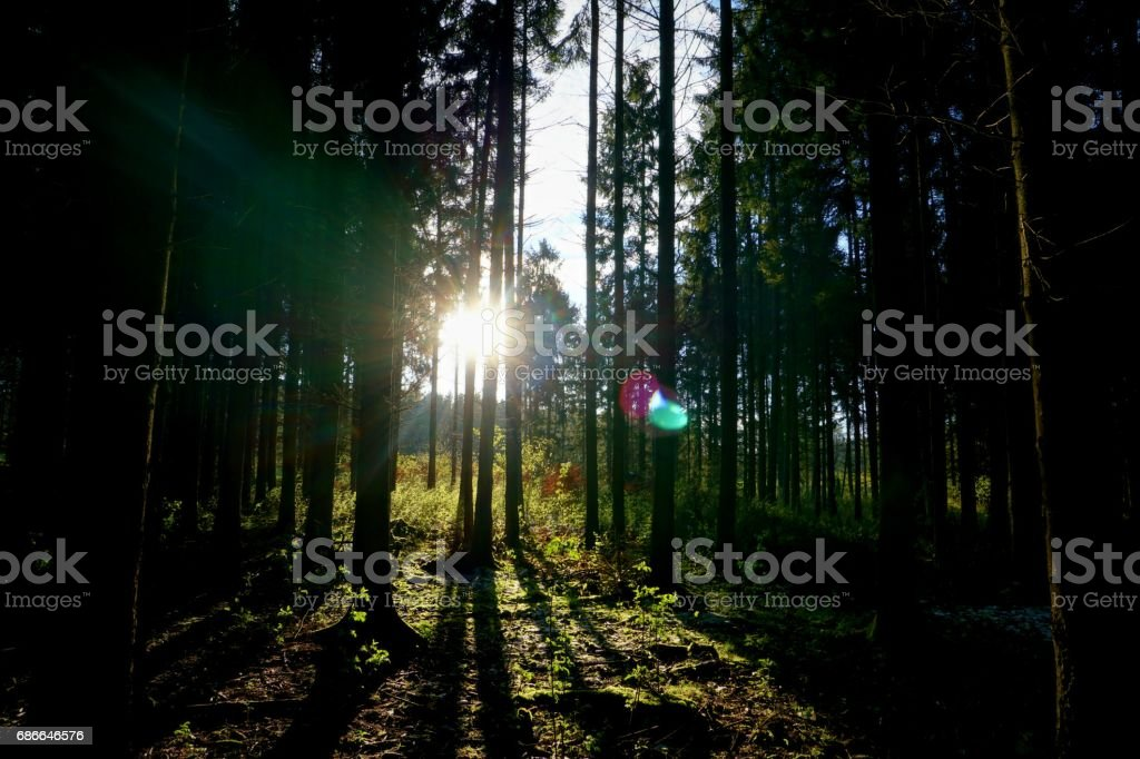 sunset in forest royalty-free stock photo