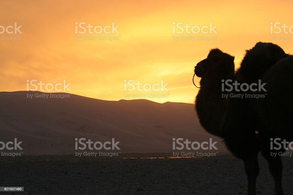 Sunset in Gobi photo libre de droits