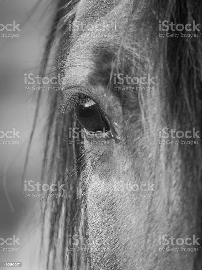 Sunset in horse's eye stock photo