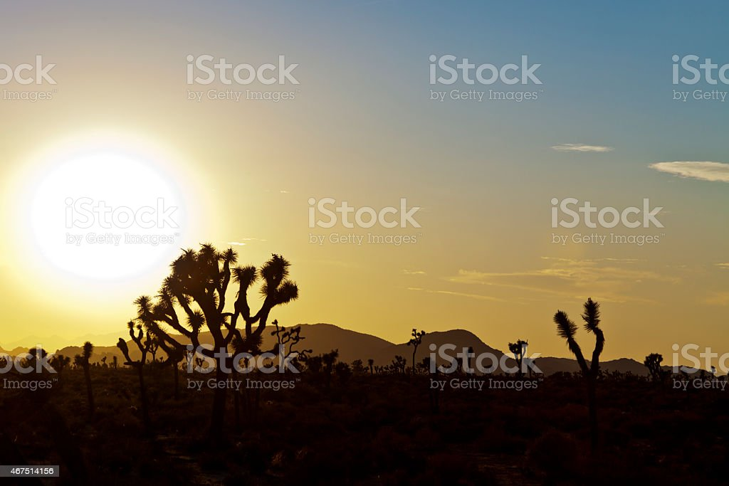 Sunset in Joshua Tree National Park stock photo