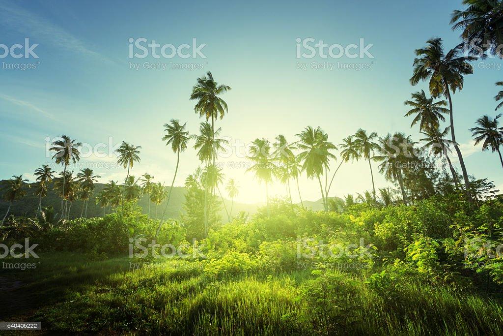 sunset in jungle, seychelles stock photo