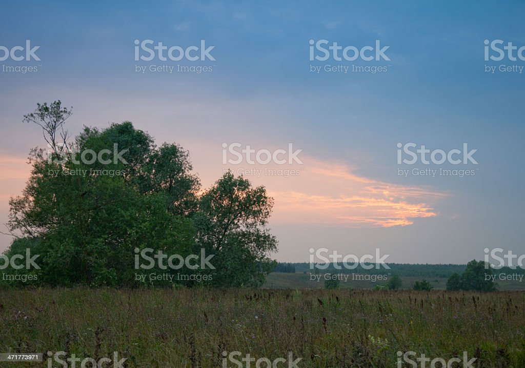 Sunset in meadow royalty-free stock photo