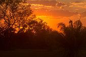 Sunset in Pantanal Wetland, Brazil