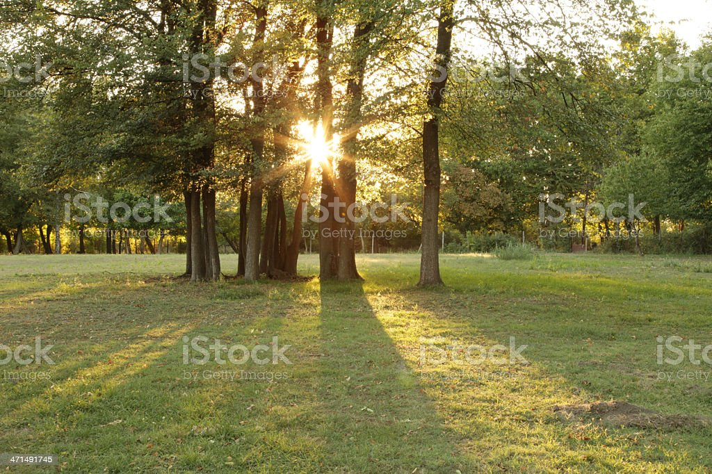 sunset in park royalty-free stock photo