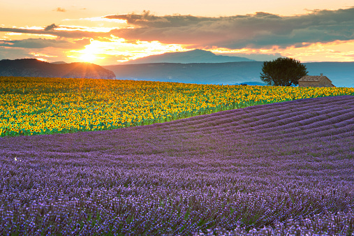 Sunset on the fields of Provence - France