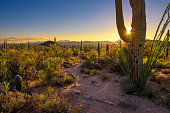 Sunset over hiking trail and cactuses in Saguaro National Park near Tucson, Arizona