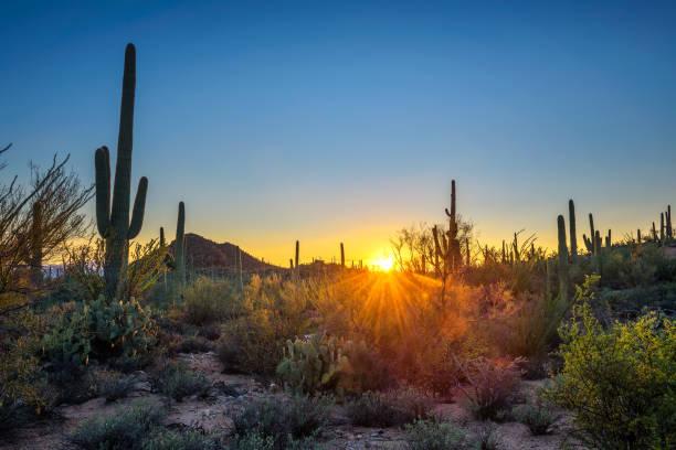 Sunset in Saguaro National Park in Arizona stock photo