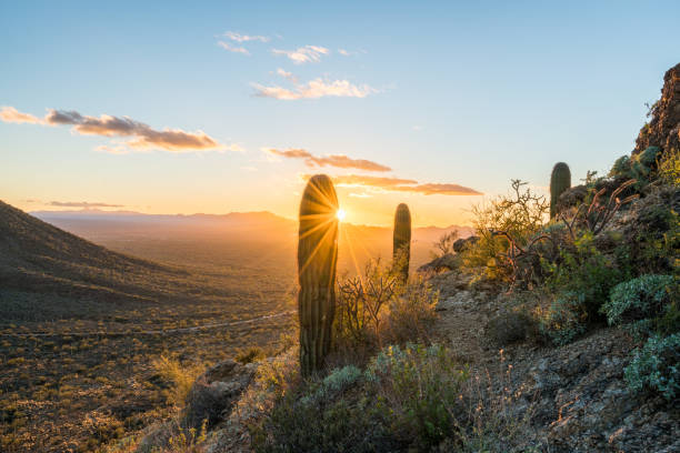 Sunset in Saguaro National Park West Saguaro cacti stand against setting sun at Gates Pass near Tucson Arizona tucson stock pictures, royalty-free photos & images