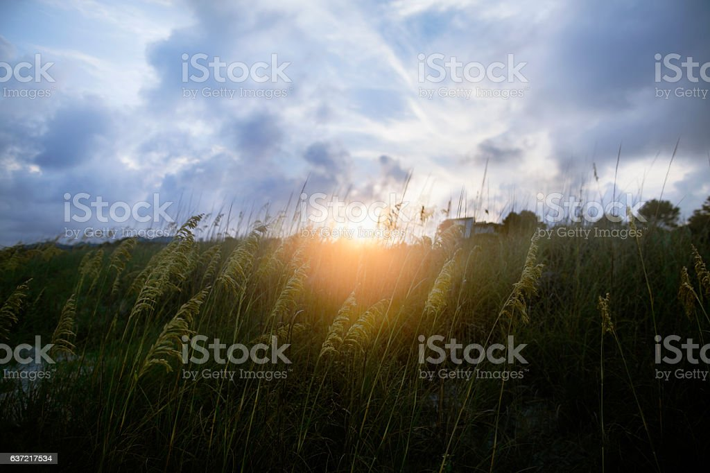 Sunset in sand dunes at the beach stock photo