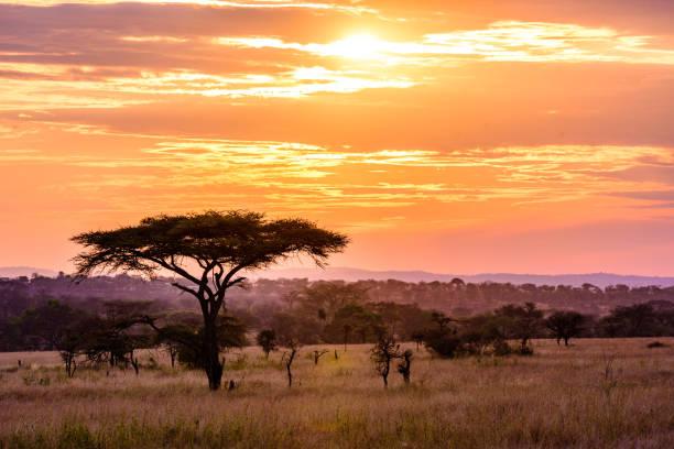 Sonnenuntergang in der Savanne von Afrika mit Akazienbäumen, Safari in der Serengeti von Tansania – Foto