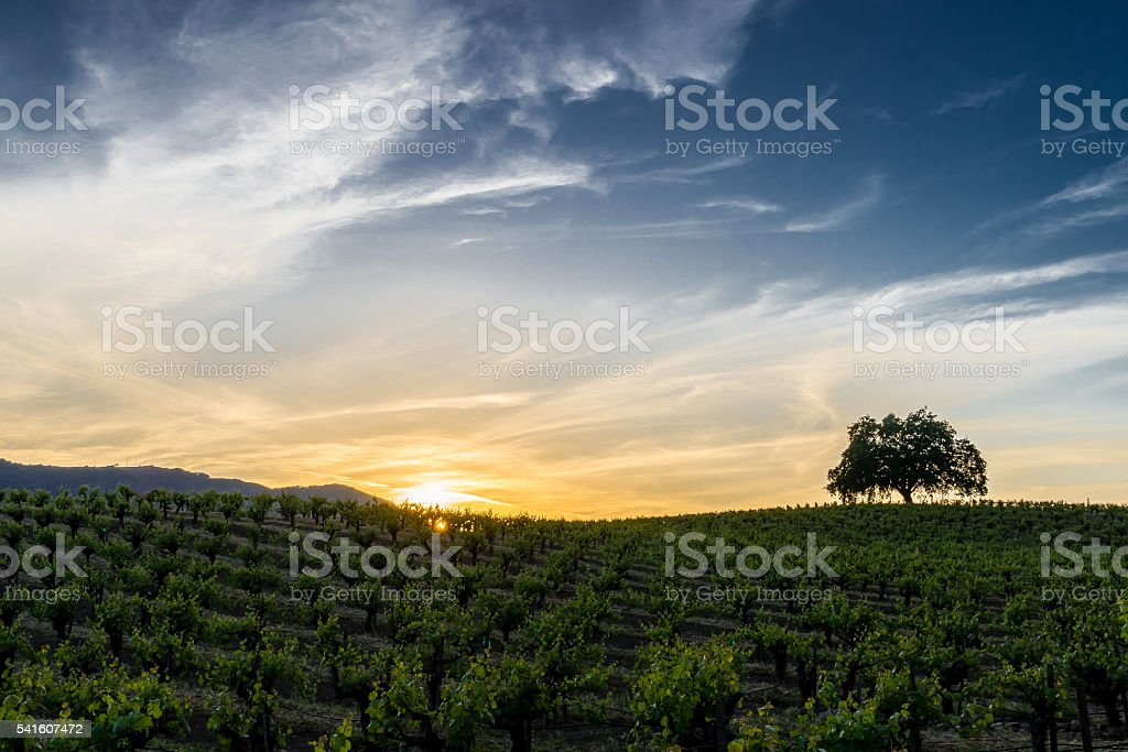 Sunset in Sonoma California wine country stock photo