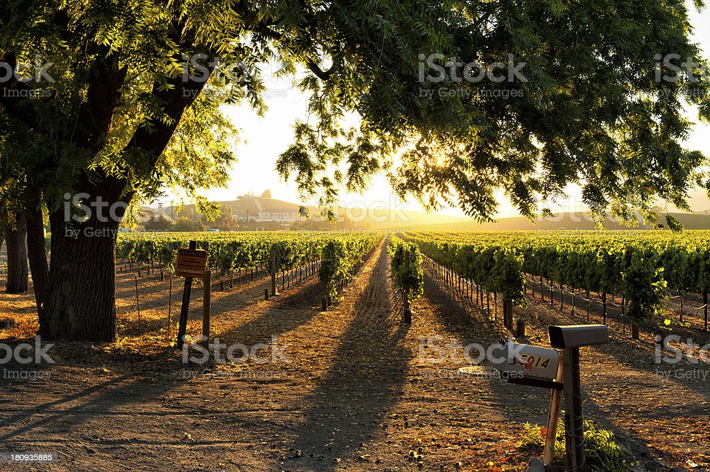 Sunset in Sonoma wine country stock photo