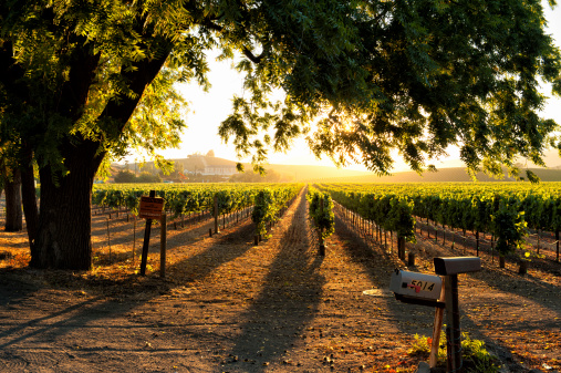Sunset In Sonoma Wine Country Stock Photo - Download Image Now