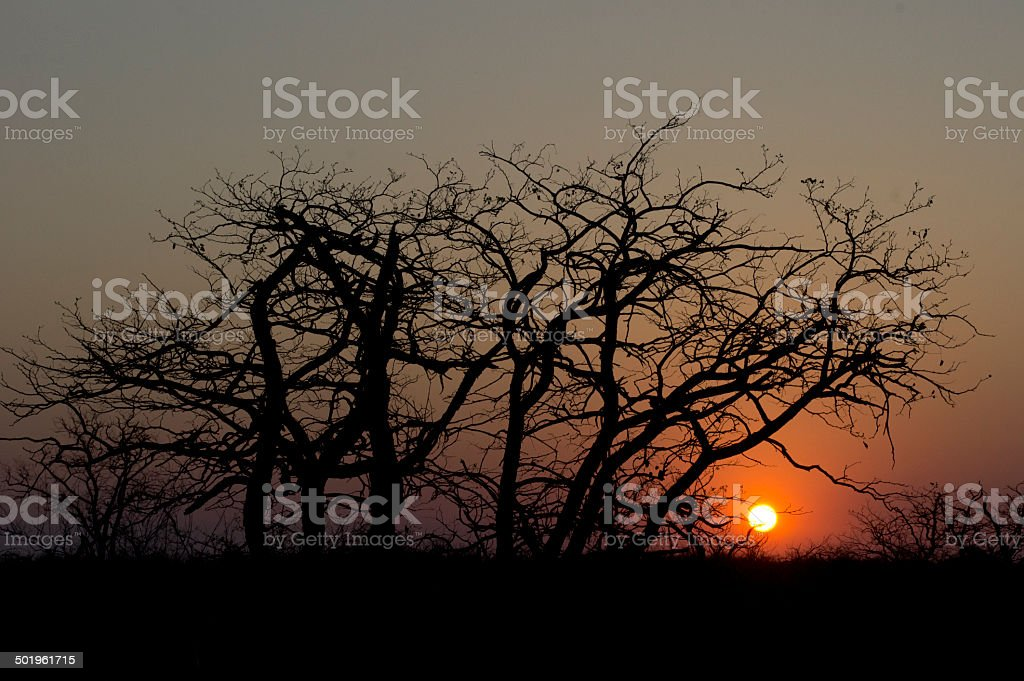 Sunset in South Africa stock photo