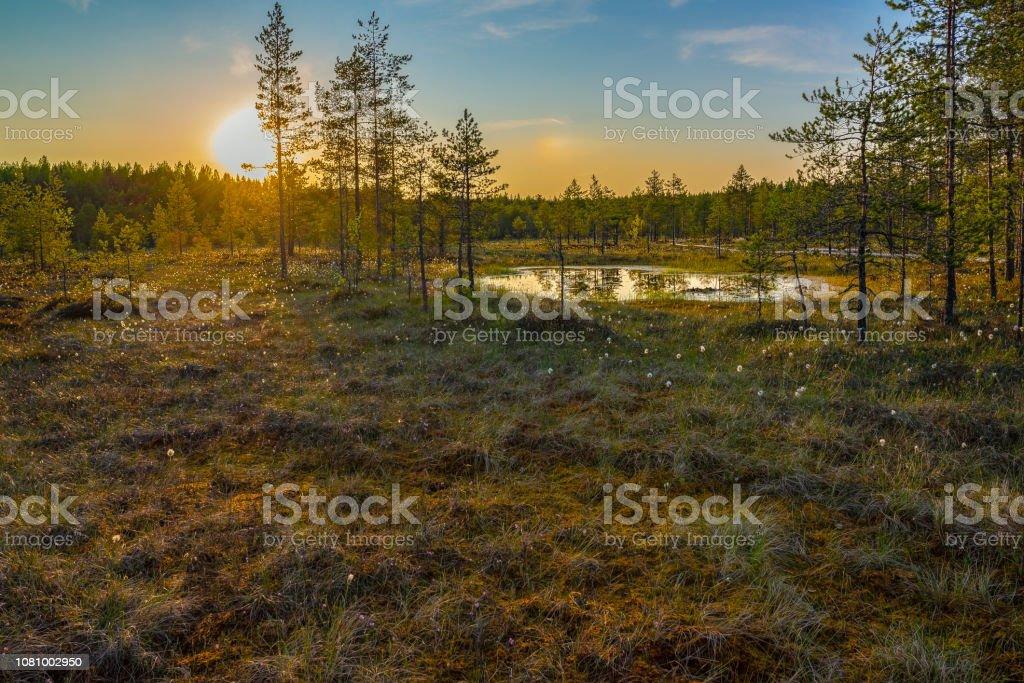 Sunset in swamp stock photo