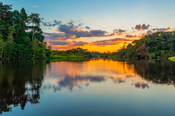 Sunset in the Amazon Rainforest River Basin Reflection of a sunset by a lagoon inside the Amazon Rainforest Basin. The Amazon river basin comprises the countries of Brazil, Bolivia, Colombia, Ecuador, Guyana, Suriname, Peru and Venezuela. amazon river stock pictures, royalty-free photos & images