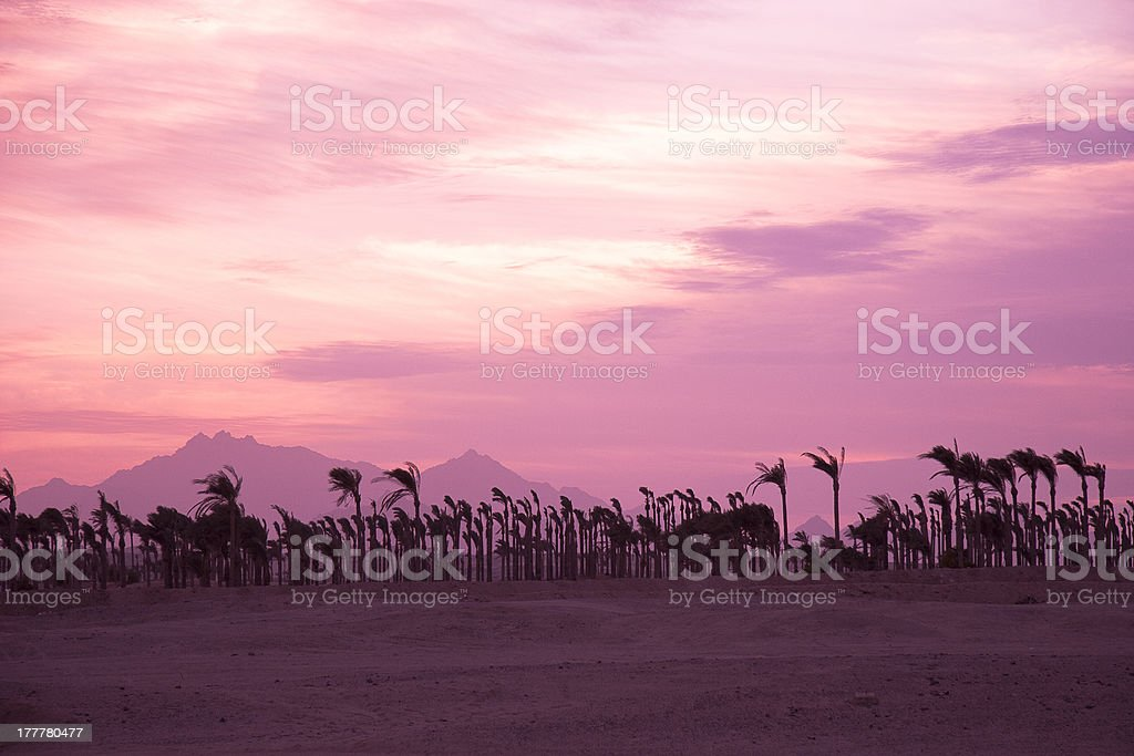 Sunset in the desert - Palm Silhouettes royalty-free stock photo
