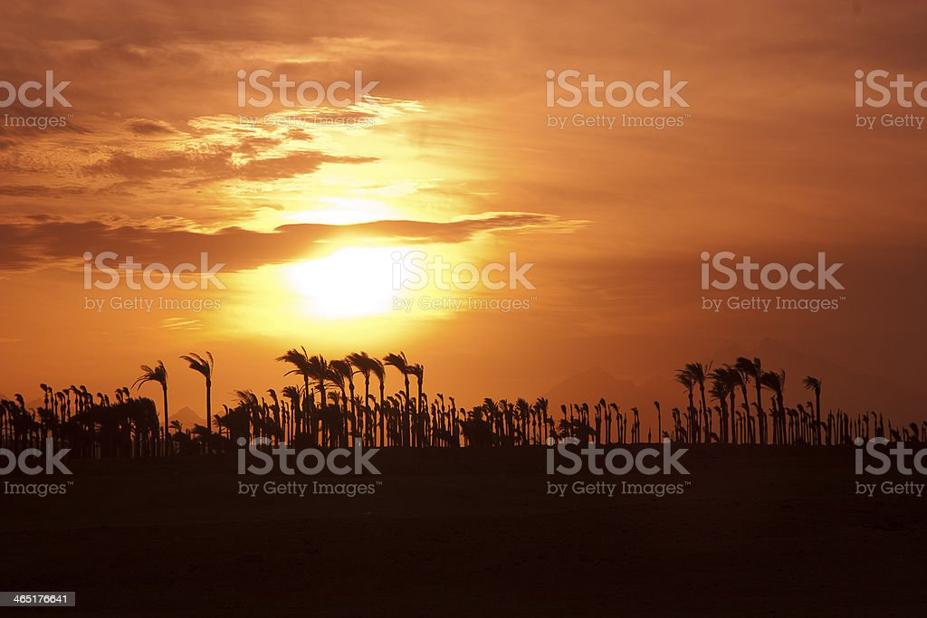 Sunset in the desert - Palm Silhouettes stock photo