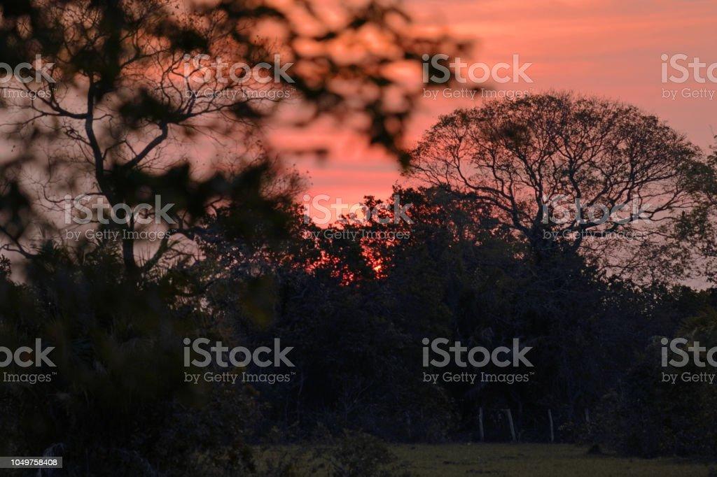 Pôr do sol na estação seca no Pantanal - foto de acervo