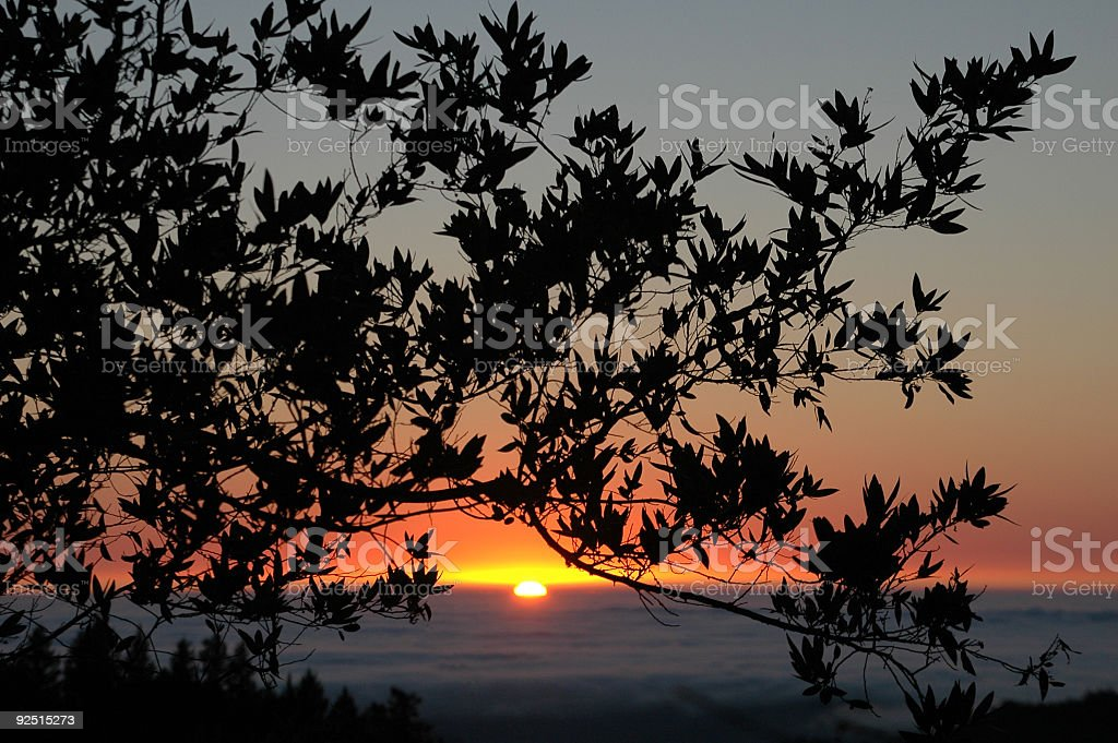 Sunset in the fog royalty-free stock photo